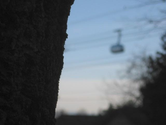tram-tree