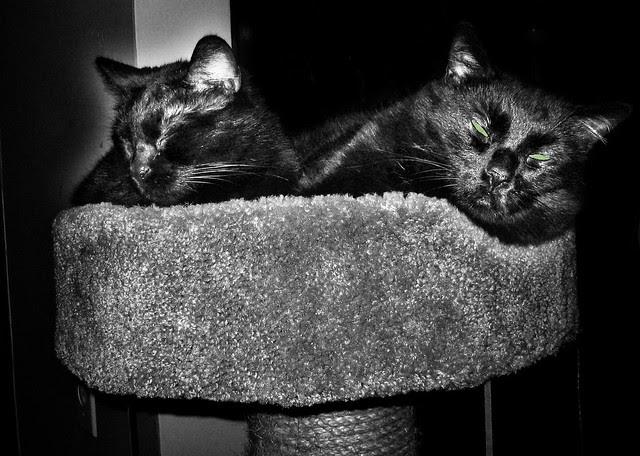 velvet and little one