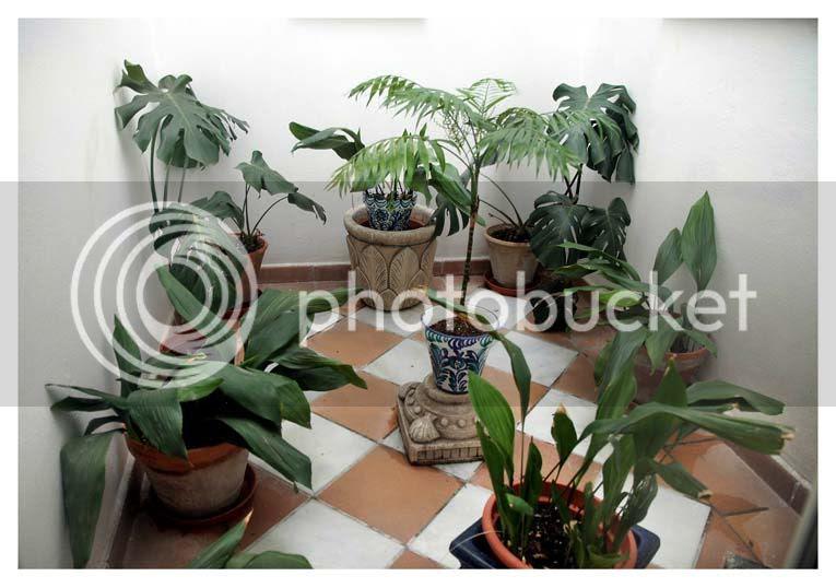 photo plantasenpatiocerradocopia.jpg