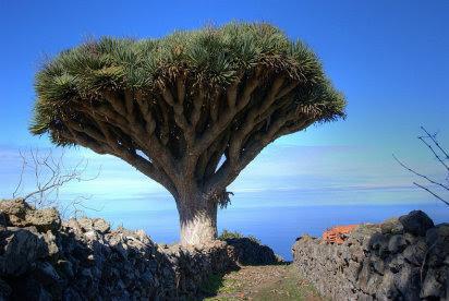 Plantas peligro de extinción