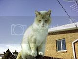 Uintah Cat