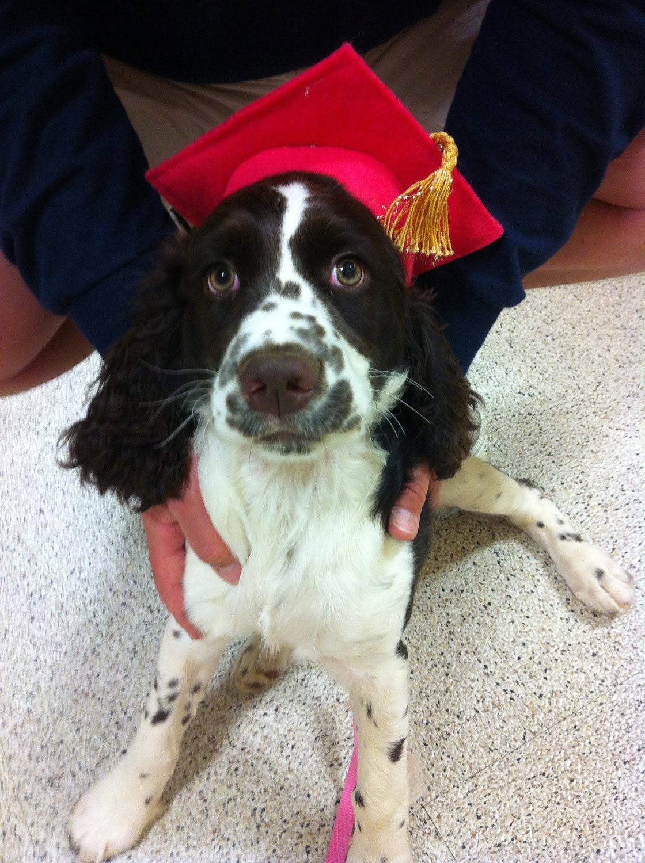 Dog Graduation Hat Costume