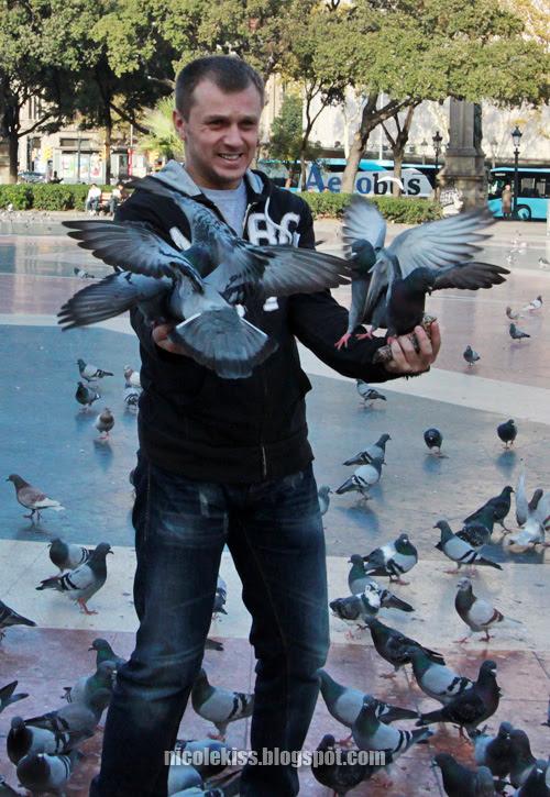 more birds flocking