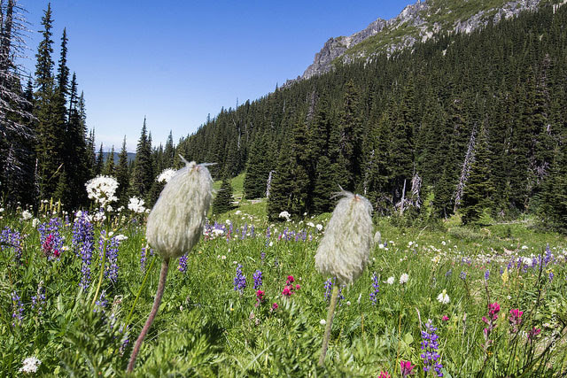 -- Berkeley                                         Park, Mt. Rainier National Park,                                         Washington --