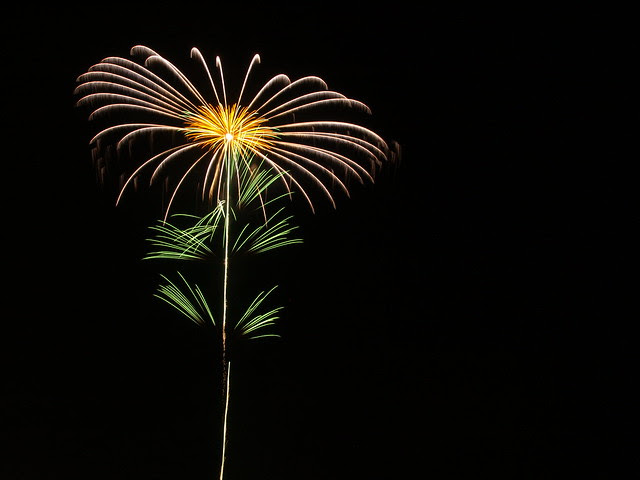 Flower on the dark sky