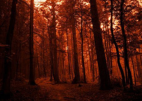 Germany taunus forest