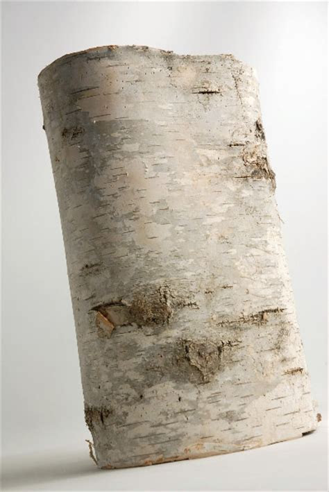 Natural Birch Bark Tubes (7 10in)