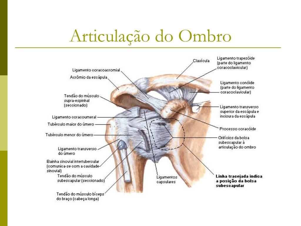 Articulação do Ombro