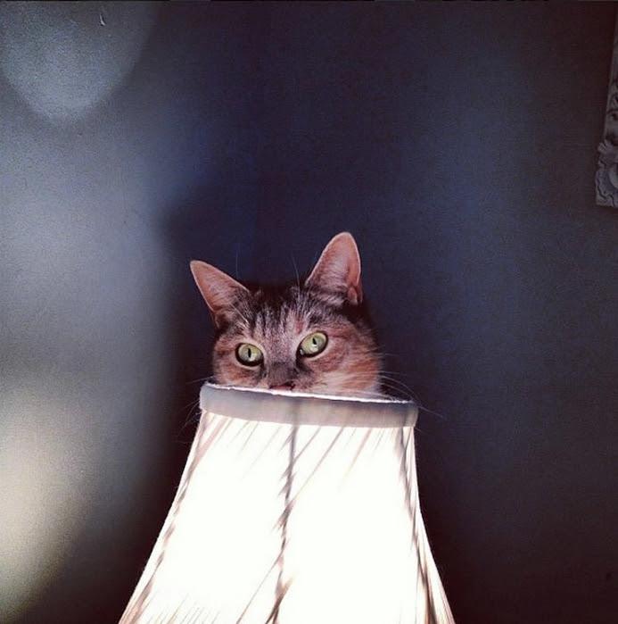 hidingcats29 (693x700, 248Kb)