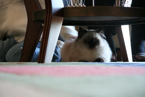 Crouching Kitty