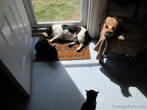 Bert and cats (5) - FarmgirlFare.com