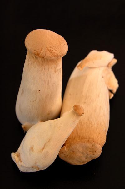 king oyster mushroom©  by haalo