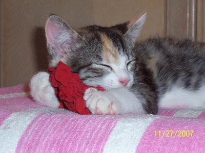Today's Kitten