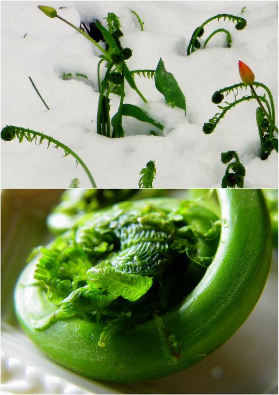 Fiddlehead Greens