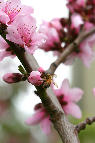 bee and peach