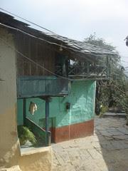 bhola hood
