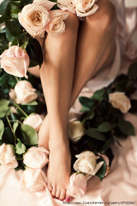 steps of roses
