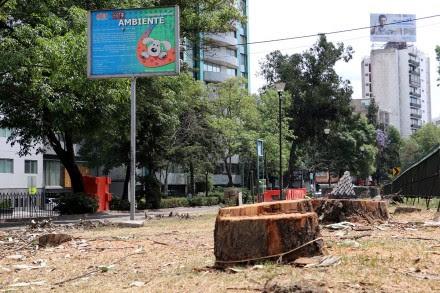 Los árboles talados en avenida Río Churubusco. Foto: Raúl Pérez