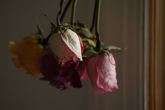 Dried roses (3)