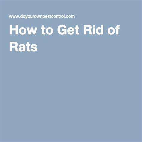 Best 25  Rat control ideas on Pinterest   Rat shot, Diy mice repellent and Skunk repellent