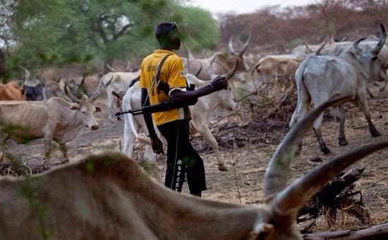 Herdsmen Have Spilled 36,000 Litres Of Nigerian Blood – ICCA/Umunna