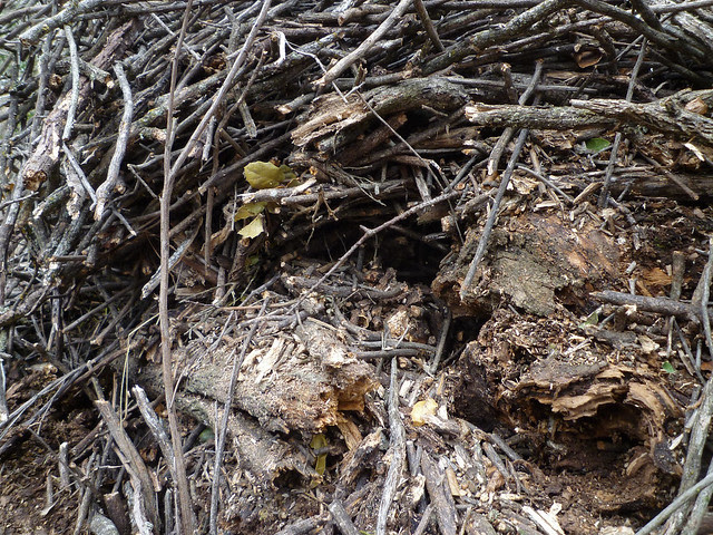 sectioned midden