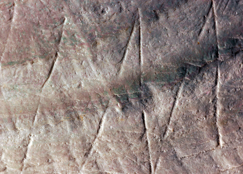 Detalle del grabado en zigzag en la cáscara Pseudodon fósil.