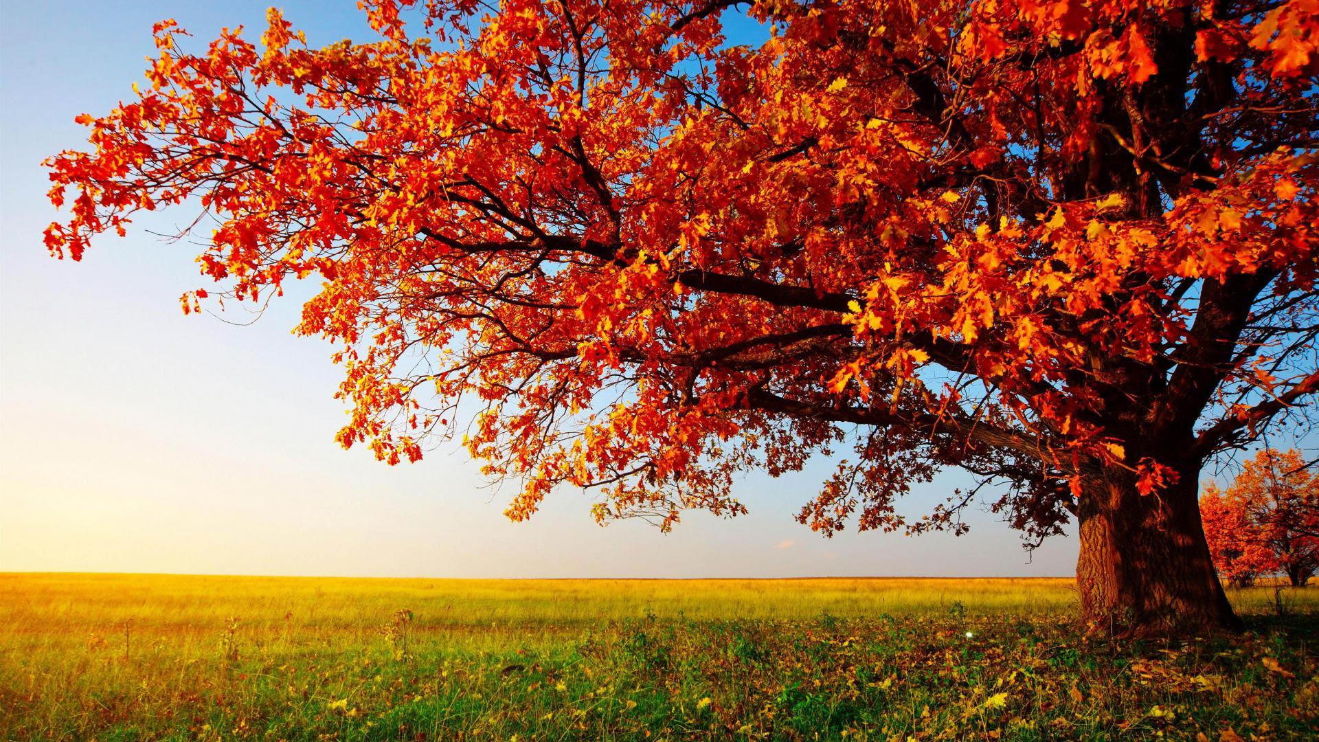 Free Desktop Wallpaper HD - ITC Sales Blog