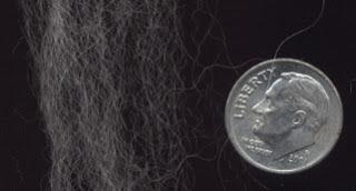A few Angora fibers compared to a dime.