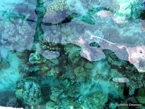 kalachuchi-eden-reef-coron-palawan.jpg