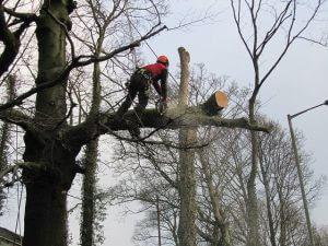 magas fák kivágása Veres Péter út