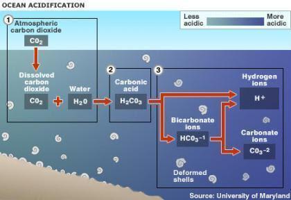 Processo de acidificação dos oceanos