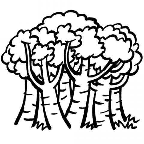 Orman Haftası Etkinlikleri 9 Okul öncesi Etkinlik Faliyetleri