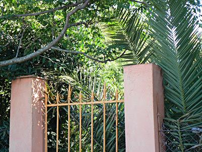 portail et palmier.jpg