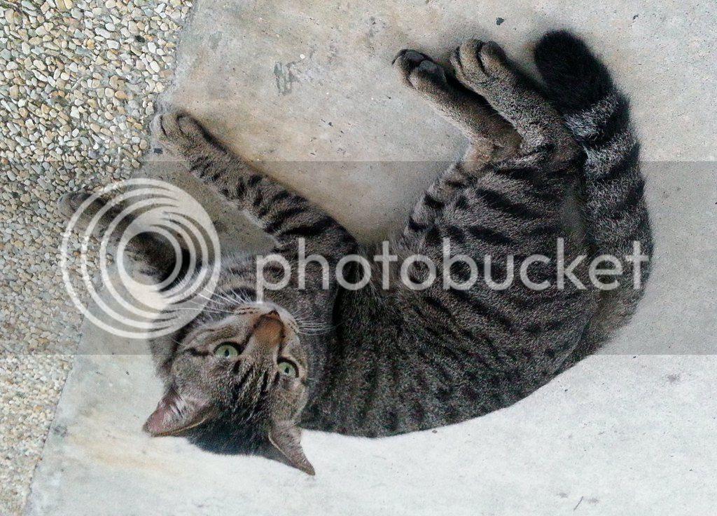 photo CatJRT14Aug05.jpg