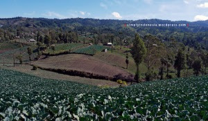Desa Ranupani, Tengger