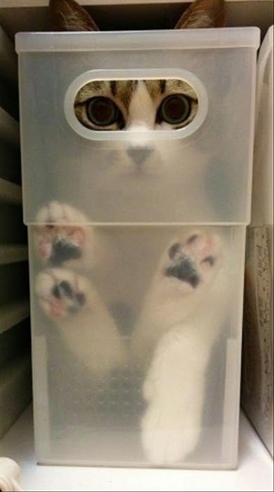 hidingcats40 (390x700, 137Kb)