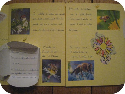 lapbook abeille 5