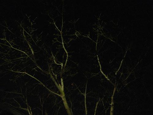 Trees at Night _ 9267