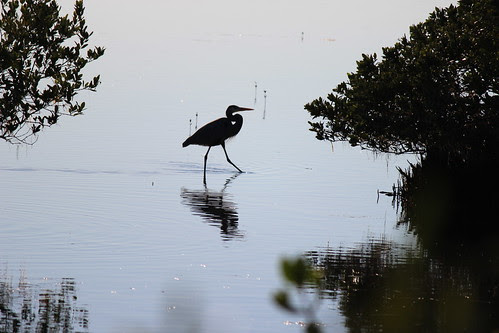 IMG_3732_Great_Blue_Heron_Silhouette