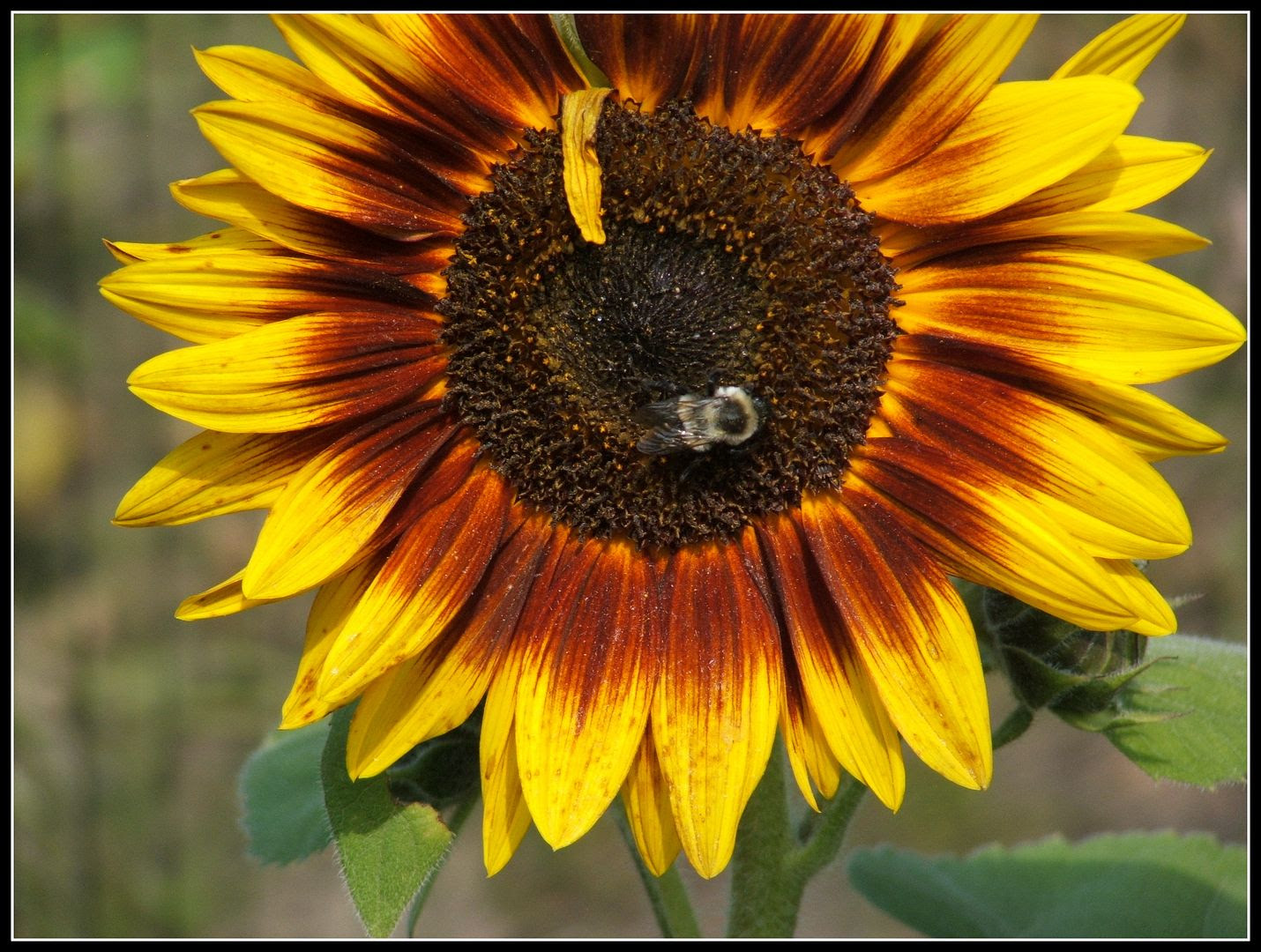 by Angie Ouellette-Tower for http://www.godsgrowinggarden.com/ photo DSCF9047_zps9dbf7vgl.jpg