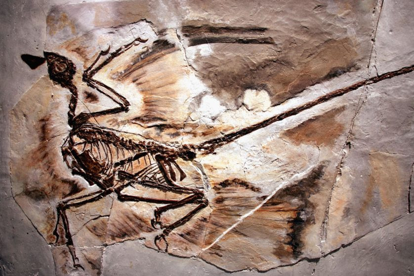 Exhibit Displays Newest Dinosaur Fossils