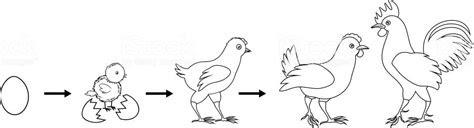 tavuk kuemes boyama gazetesujin