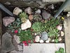 rock garden above