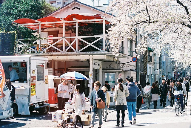 Sakura Walk in Nakameguro