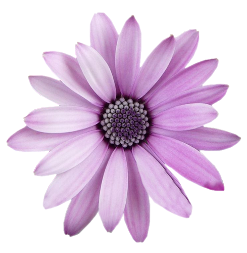 FreeToEdit flower png with transparent background...