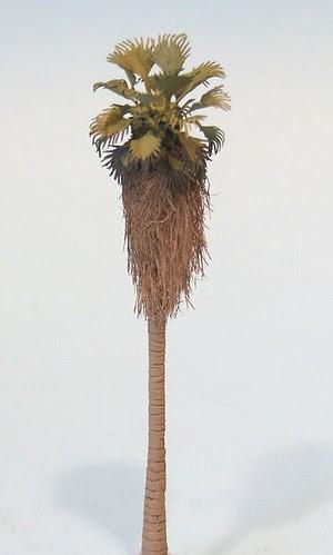 Manx Palm