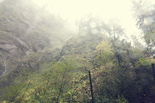 Portland Foggy Cliff