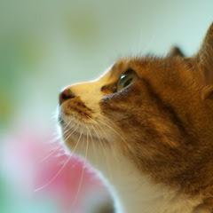 猫の日2011_3