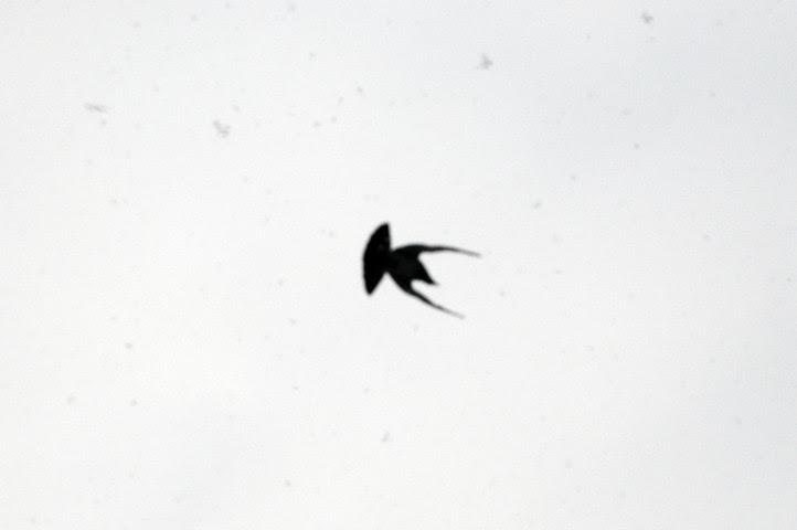 birds of the acme parking lot_1275_1 web